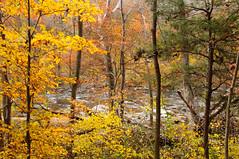A view of the River (Jon Wittman Photography) Tags: park tree fall water colors leaves river nikon stream fallcolors scenic maryland baltimore elements gunpowder gunpowderriver d90 18105mm nikond90 nikkor18105mm elementsorganizer jpwphotography