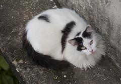 La gata Sasha descansando en la marquesina del segundio piso, donde nadie la puede molestar (lezumbalaberenjena) Tags: santa clara cat cuba villa gata sasha villas villaclara 2013