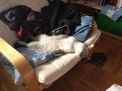 IMG_1098 (Going Bananas!) Tags: sleeping cute cat kitten break pussy sleepy pussycat cutecat bestfriends cutekitten