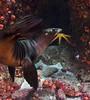 slwstar2946 (gerb) Tags: topv111 mexico topv555 topv333 underwater starfish scuba wildanimal sealion juvenile fins seaofcortez tvp aquatica cupcoral d7000 sigma1017fe
