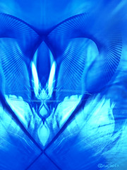 Feathers (Camilla's photos! Thank you for viewing ) Tags: blue light abstract bird art norway digital fire photo peace foto transformation heart kunst feathers olympus fred lys flamme fugl abstrakt hjerte grafikk bltt speiling fjr manitpulation manipulasjon bomomo graphicsmirroring