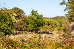 Colorful Bush (medXtreme) Tags: australia tasmania outback australien tassie bushes shrubs scrub busch tasmanien hinterland commonwealthofaustralia narawntapunationalpark asbestosrangenationalpark vandiemensland australienkontinent lutriwita tasmaniasserengeti