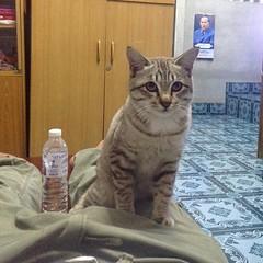 ถ่ายติดภาพ #แมว อำตอนเช้า #cat