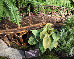 Central Park Gothic Arch Bridge (1861), Holiday Train Show 2013, New York Botanical Garden (jag9889) Tags: show city nyc bridge plants holiday ny newyork building architecture train garden botanical miniature arch place centralpark bronx manhattan gothic landmark conservatory historic replica national botanicalgarden nybg 1861 newyorkbotanicalgarden 2014 no28 holidaytrainshow 2013 enidahaupt jag9889 2013holidaytrainshow