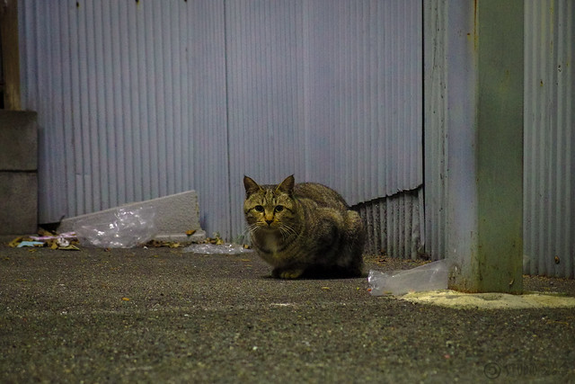 Today's Cat@2014-01-24