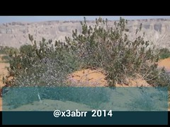 #روضة #الخفس #حريملاء #الطوقي #روضة_الخفس #Spring #plant #ربيع #الربيع #nature #video #videos #فيديو #كشته #براري #Landscape #تصويري #Riyadh #لاندسكيب #السعودية #ksa #saudi #Panorama  #سوني #a57 #Alpha #عدستي #lens #الرياض (photography AbdullahAlSaeed) Tags: pictures panorama plant nature lens landscape for video spring flickr watch profile taken 9 best follow saudi link to ago alpha riyadh videos و minutes carefully في الصور كشته ksa الربيع a57 عدستي تصويري السعودية الرياض ربيع فيديو روضة سوني حريملاء الخفس الفيديو براري لاندسكيب رابط الفليكر الطوقي اوضح اتبع بدقة لمشاهدة بروفايلي روضةالخفس