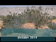 # # # # #_ #Spring #plant # # #nature #video #videos # # # #Landscape # #Riyadh # # #ksa #saudi #Panorama  # #a57 #Alpha # #lens # (photography AbdullahAlSaeed) Tags: pictures panorama plant nature lens landscape for video spring flickr watch profile taken 9 best follow saudi link to ago alpha riyadh videos  minutes carefully    ksa  a57
