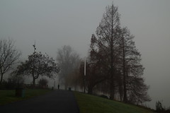 Fog at Morning (jplemar31) Tags: ff