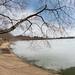 Washington DC Cherry Blossoms - February 20, 2014