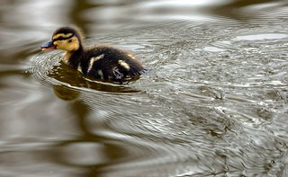 Mind The Duck Wash!