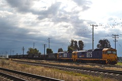 8113 AND 8175 (rob3802) Tags: diesel railway loco nsw locomotive harden graintrain diesellocomotive 8175 pacificnational dieselelectriclocomotive 81class 8113