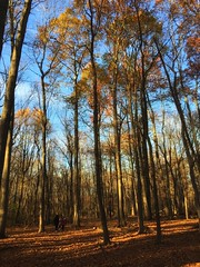 Walk among the giants (Tim Loesch) Tags: mercercounty penningtonnj