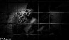 In a cage (zara-photos) Tags: bw animal blackandwhite captured gorilla wild zoo