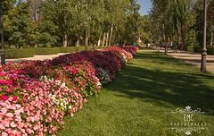 Flores El Retiro (Elisabeth Martnez Cnovas) Tags: madrid parquedelretiro elretiro plazamayor puertadelsol palacio de cristal jardines puerta alcala