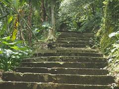 P9270092 (tonkonogov) Tags: indonesia bali ubud