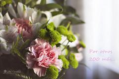 200 clicks (Panthea616) Tags: lodefotos flores reto200 flowers colores colors 7dwf flora