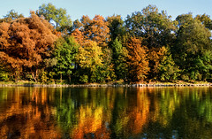 Rainbow Forest (DILLEmma Photography) Tags: autumn fall leaves colors trees reflections water forrest sky rainbow waterfront