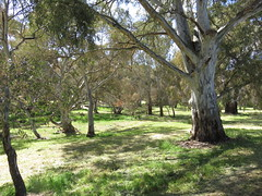 Roadside Reserve (RS 1990) Tags: goldengroverd wynnvale redwoodpark teatreegully adelaide southaustralia thursday 27th october 2016