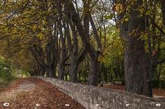 Oa Paseo del Jardin Secreto 1 (carlostorrebenito) Tags: arbol banco h hoja muro paseo tronco verja tree bench leaf wall ride trunk irongate oa burgos espaa iso31662
