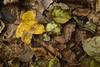 Autunno sul Carso Triestino (paolo-p) Tags: foglie leaves carso trieste