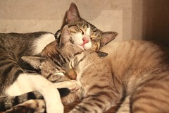 Kevin $ Stuart (davidrove65) Tags: cats canon eosrebelt4i sigma1850mmf28dcexmacro