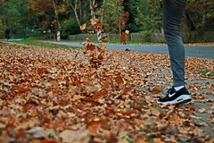 Leavestorm (WisoDesign) Tags: autumn herbst leaves october outdoor fall storm colors like child kick it nike