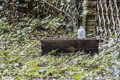 Un trago en medio de la flora (_altaria01669_) Tags: espaa spain abandonado abandoned antiguo viejo vintage esp es sp casa piso apartamento apartment flat old past pasado tiempo time congelado frozen ago years aos dcadas