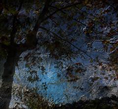 Noviembre en el parque (desde mi corazn) Tags: rbol hojas otoo anochecer cielo ramas paisaje