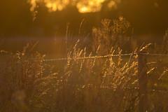 Sunset mood - HFF!