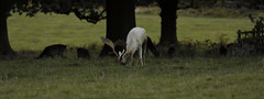 Bradgate Country Park 23th October 2016 (boddle (Steve Hart)) Tags: badgate country park 23th october 2016 steve hart boddle steven bruce wyke road wyken coventry united kingdon england great britain canon 5d mk4 100400mm is usm ii 24105mm standard 815mm fisheyes lens 1635mm l wideangle wide angle 100mm prime macro laowa 15mm f4 11 wild wilds wildlife life nature natural bird birds flowers flower fungii fungus insect insects spiders butterfly moth butterflies moths creepy crawley winter spring summer autumn seasons