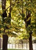 green bay packers ;/) ЗОРКИЙ-5 (schyter) Tags: зоркий5 zorki5 red name sn5838124 pm1930 1958 зенитар50 industar50 3550 kmz redp kodak color plus 200 sverdlovsk4 sovietlightmeter tetenal colortec c41 30°c epson v600 analogica analogic film pellicola colore 135 colorplus homemade development homemadescanned soviet camera lens esposimetro fsu allaperto expired scaduta giardino giochi parco basiasco villa biancardi autunno lodigiano lodi 160iso