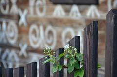 wooden fence (Hayashina) Tags: slovakia cicmany fence wooden plant pattern hff