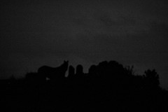 25-10-2016_20h08 (LouLeGrain) Tags: night darkness nuit sombre blackandwhite bw noiretblanc nb horse cheval silhouette