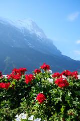 Jungfraujoch from Grindelwald (wuyanxu) Tags: september switzerland grindelwald bern ch