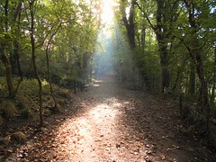 kirkby in ashfield (kelvin mann) Tags: kirkbyinashfield kirkby ashfield portlandpark woods outdoors nottinghamshire notts