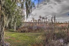 Lake Park Georgia Lowlands (lcooley1952) Tags: spanishmoss lakepark georgia cypress
