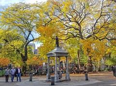 Fall foliage in Tompkins Square (Goggla) Tags: nyc new york manhattan east village tompkins square park fall autumn foliage leaves temperance fountain american elm tree 2016