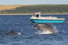 Dolphins. (Seckington Images) Tags: dolphin boat scotland flickr