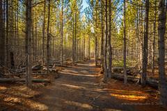 The trail to Taggart (scepdoll) Tags: grandtetonnationalpark taggartlake bradleylake hike wyoming jacksonhole jackson