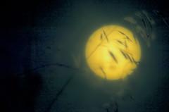 Super Moon Backdrop (L E Dye) Tags: colorefex supermoon alberta canada color d5100 ledye moon nikon grasses prairie rural