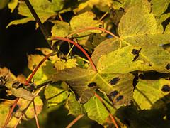 Autumn Colours (Triker-Sticks) Tags: autumn trees nature england leaves foliage thelodge sandy rspb