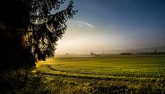 Morning light and mist (marcmayer) Tags: mist morning light october nikon oktober sunrise sonnenaufgang nebel misty fog neblig morgens