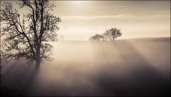 Tree Graveyard (JasonPC) Tags: mist fog light rays trees landscape sun frost cold