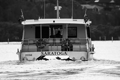 Saratoga Ferry (Merrillie) Tags: woywoy saratoga nature water nswcentralcoast newsouthwales earlymorning morning monochrome black centralcoastnsw ferry boat photography nsw outdoors waterscape dawn centralcoast bay australia