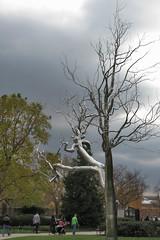 National Gallery of Art Sculpture Garden in Washington DC 20 111916 (evimeyer) Tags: nationalgalleryofart sculpturegarden washingtondc