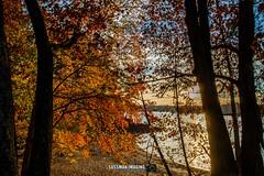 Fall Colors at Lake Lanier (The Suss-Man (Mike)) Tags: autumn bridge brownsbridge fall forsythcounty gainesville georgia hallcounty lake lakelanier lanier nature sonya550 sunset sussmanimaging thesussman water