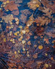 Forever Autumn (colinbell.photography) Tags: