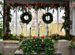 Christmas Flower Show, Allan Gardens Conservatory, Toronto, ON (Snuffy) Tags: christmas christmasflowershow allangardens toronto ontario canada level1photographyforrecreation niceasitgetslevel1