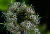 An der Wuhle (naturlicht) Tags: wuhle insekt gemeinemöhre wildpflanze spinne berlinhellersdorf berlin deutschland