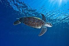 2012 11 METTRA OCEAN INDIEN 4796